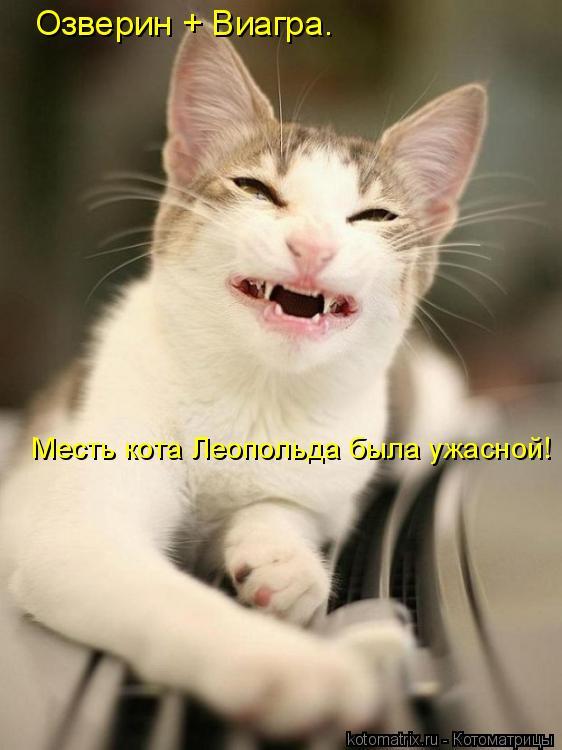Котоматрица: Озверин + Виагра.  Месть кота Леопольда была ужасной!