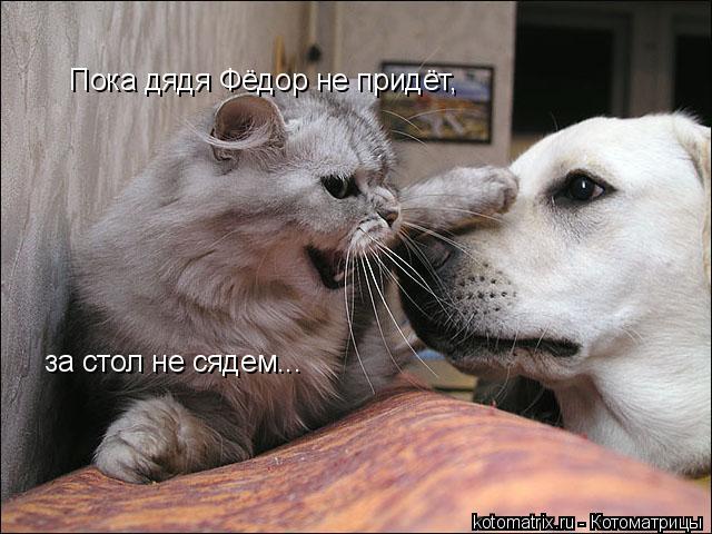 Котоматрица: Пока дядя Фёдор не придёт, за стол не сядем...