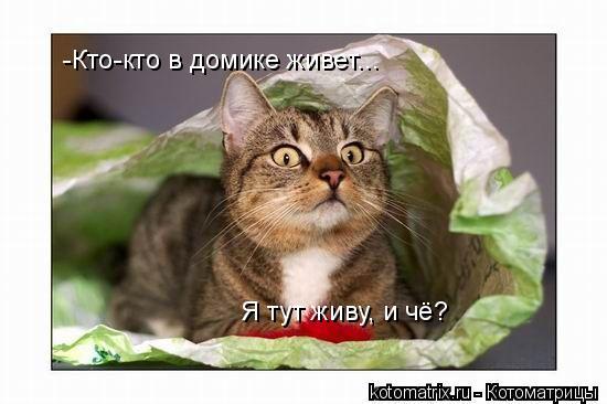 Котоматрица: -Кто-кто в домике живет... Я тут живу, и чё?