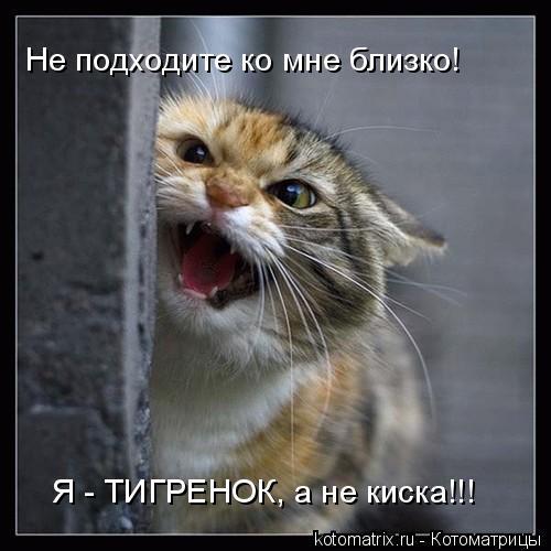 Котоматрица: Не подходите ко мне близко! Я - ТИГРЕНОК, а не киска!!!