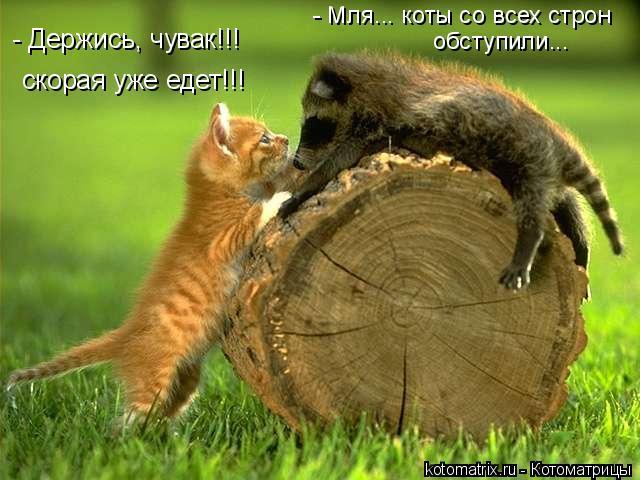Котоматрица: - Держись, чувак!!!  скорая уже едет!!! - Мля... коты со всех строн  обступили...