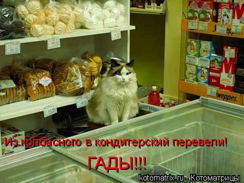 Котоматрица: Из колбасного в кондитерский перевели! ГАДЫ!!!