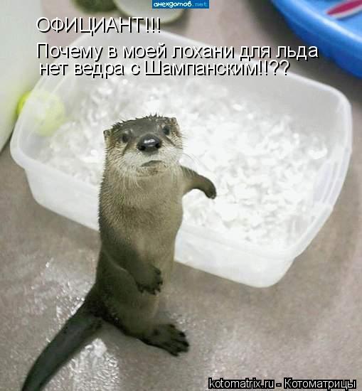 Котоматрица: ОФИЦИАНТ!!!  Почему в моей лохани для льда нет ведра с Шампанским!!??