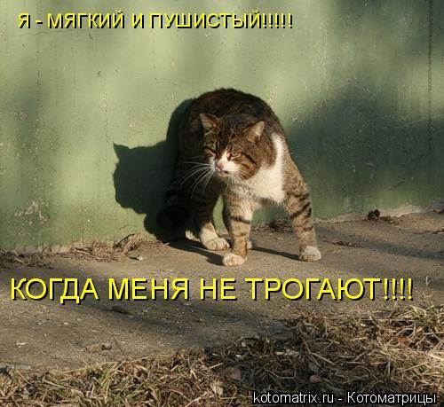 Котоматрица: Я - МЯГКИЙ И ПУШИСТЫЙ!!!!! КОГДА МЕНЯ НЕ ТРОГАЮТ!!!!
