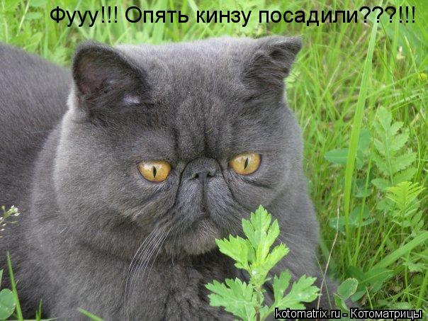Котоматрица: Фууу!!! Опять кинзу посадили???!!!