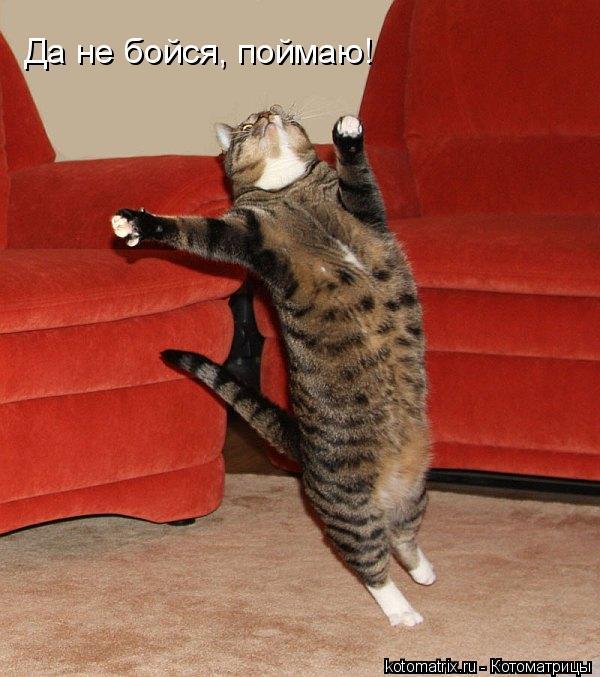 Котоматрица: Да не бойся, поймаю!