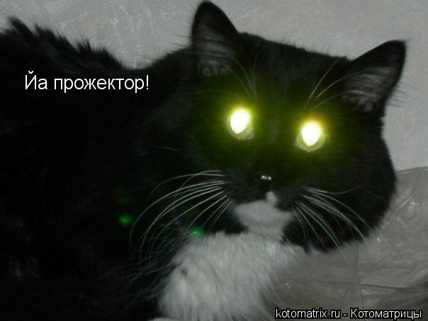 Котоматрица: Йа прожектор!
