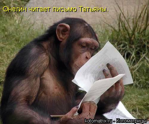 Котоматрица: Онегин читает письмо Татьяны.