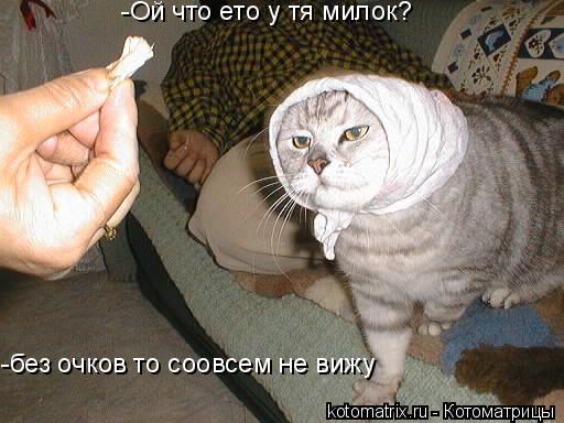 Котоматрица: -Ой что ето у тя милок? -без очков то соовсем не вижу