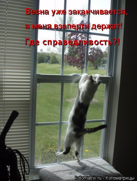 Котоматрица: Весна уже заканчивается, а меня взаперти держат!    Где справедливость?!