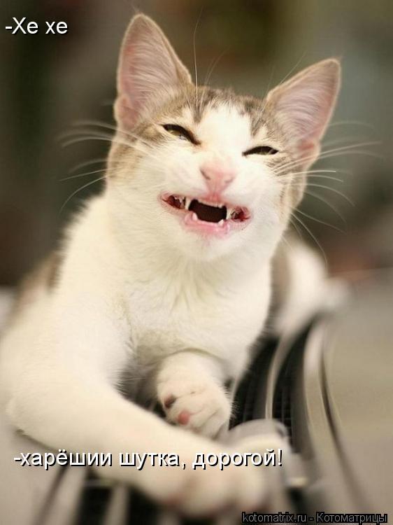 Котоматрица: -Хе хе -харёшии шутка, дорогой!