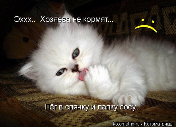 Котоматрица: Лёг в спячку и лапку сосу... Эххх... Хозяева не кормят... :(