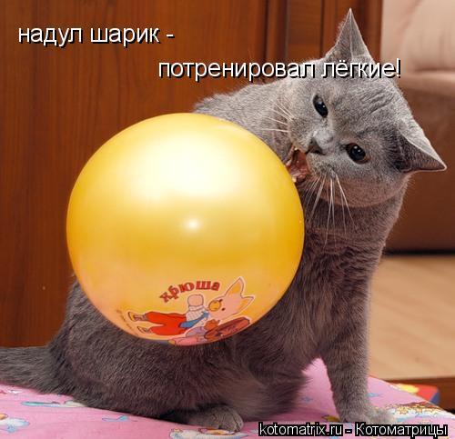 Котоматрица: надул шарик -  потренировал лёгкие!