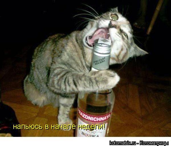 Котоматрица: напьюсь в начале недели!