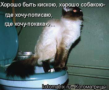 Котоматрица: Хорошо быть кискою, хорошо собакою- где хочу-пописаю,  где хочу-покакаю...