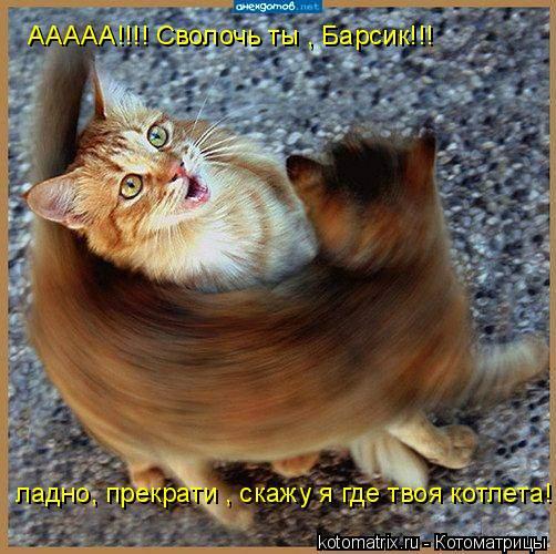 Котоматрица: ААААА!!!! Сволочь ты , Барсик!!! ладно, прекрати , скажу я где твоя котлета!!!