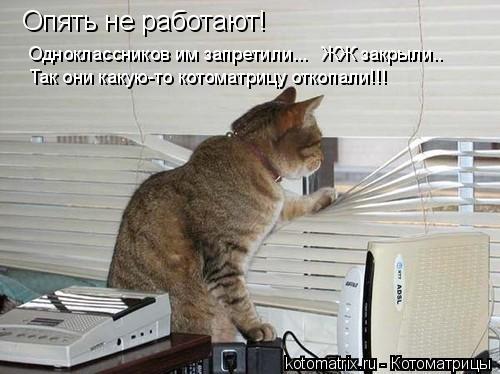 Котоматрица: Опять не работают!  Одноклассников им запретили... Так они какую-то котоматрицу откопали!!! ЖЖ закрыли..
