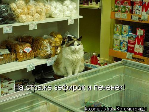 Котоматрица: На страже зефирок и печенек!