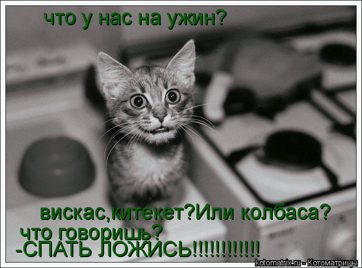 Котоматрица: что у нас на ужин? вискас,китекет?Или колбаса? что говоришь? -СПАТЬ ЛОЖИСЬ!!!!!!!!!!!!