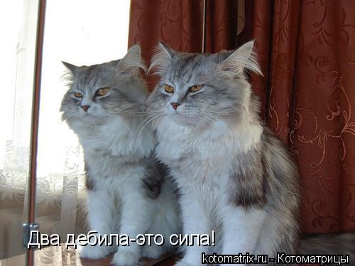 Котоматрица: Два дебила-это сила!
