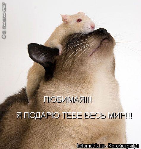 Котоматрица: ЛЮБИМАЯ!!! Я ПОДАРЮ ТЕБЕ ВЕСЬ МИР!!!