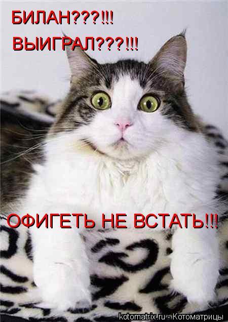 Котоматрица: БИЛАН???!!! ОФИГЕТЬ НЕ ВСТАТЬ!!! ВЫИГРАЛ???!!!