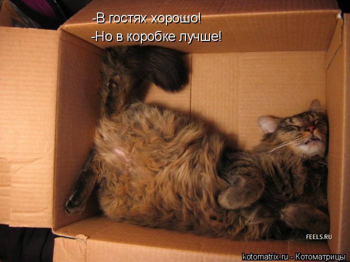 Котоматрица: -В гостях хорошо! -Но в коробке лучше!