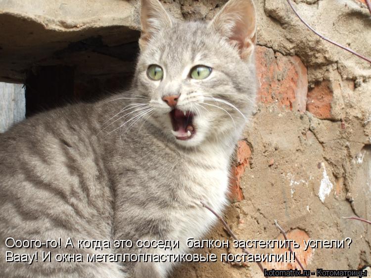Котоматрица: Ооого-го! А когда это соседи  балкон застеклить успели? Ваау! И окна металлопластиковые поставили!!!