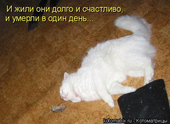 Котоматрица: И жили они долго и счастливо,  и умерли в один день...