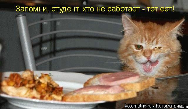 Котоматрица: Запомни, студент, хто не работает - тот ест!