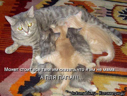 Котоматрица: Может стоит все таки им сказать,что я им не мама... А ПЛЯ ПАПА!!!...