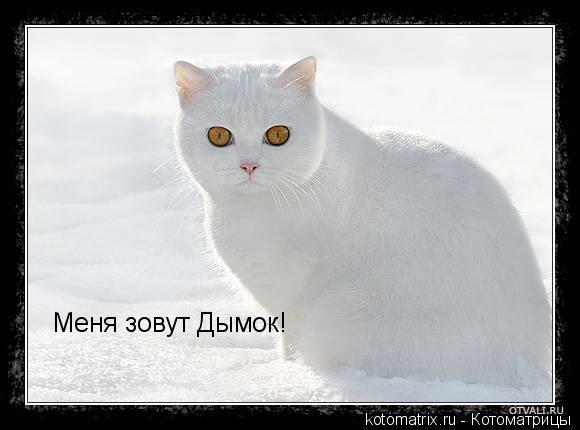 Котоматрица: Меня зовут Дымок!