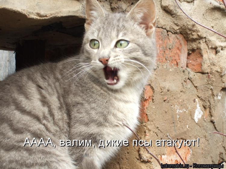 Котоматрица: АААА, валим, дикие псы атакуют!