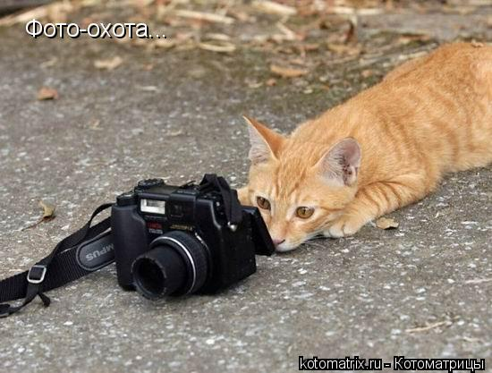 Котоматрица: Фото-охота...