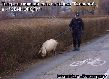 """Котоматрица: Теперь в милиции есть не только """"Кинологи"""", а и """"СВИНОЛОГИ""""!"""