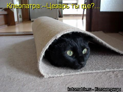 Котоматрица: Клеопатра:--Цезарь ты где?...