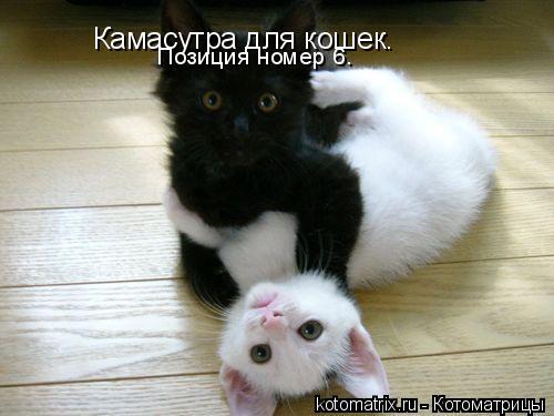 Котоматрица: Камасутра для кошек. Позиция номер 6.