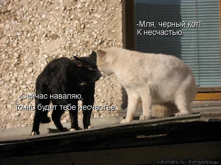 Котоматрица: -Мля, черный кот!  К несчастью.... -Сейчас наваляю, точно будет тебе несчастье.