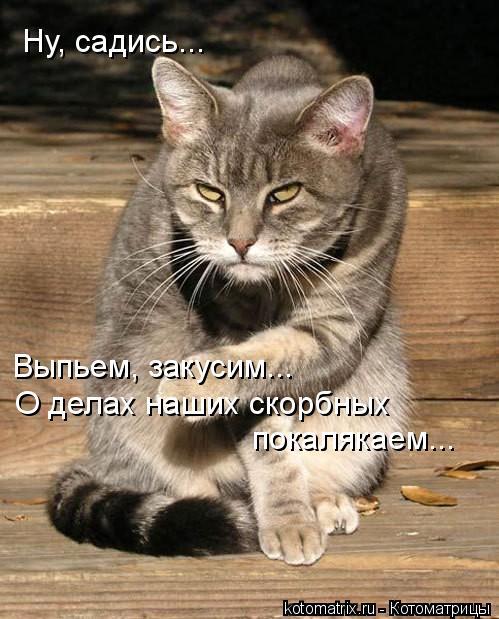 Котоматрица: Выпьем, закусим... О делах наших скорбных покалякаем... Ну, садись...