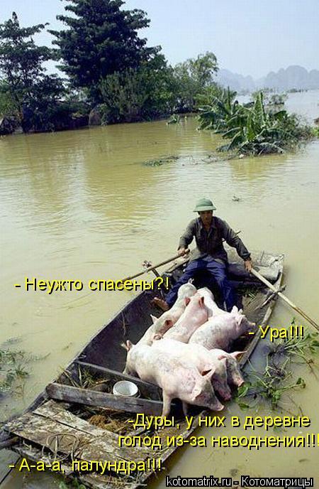 Котоматрица: - Неужто спасены?! - Ура!!! -Дуры, у них в деревне  голод из-за наводнения!!! - А-а-а, палундра!!!