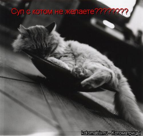 Котоматрица: Суп с котом не желаете????????