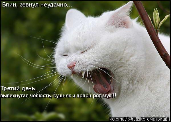 Котоматрица: Блин, зевнул неудачно... Третий день:  вывихнутая челюсть, сушняк и полон рот мух!!!