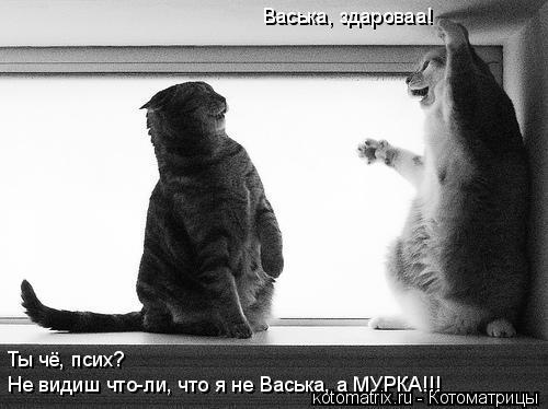 Котоматрица: Васька, здароваа! Ты чё, псих? Не видиш что-ли, что я не Васька, а МУРКА!!!