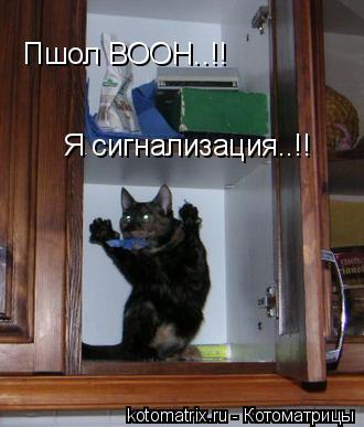 Котоматрица: Пшол ВООН..!! Я сигнализация..!!