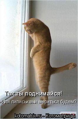 Котоматрица: Так ты поднимайся! Или пиписьками мериться будем?