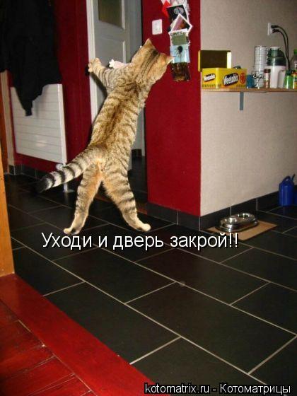 Котоматрица: Уходи и дверь закрой!!
