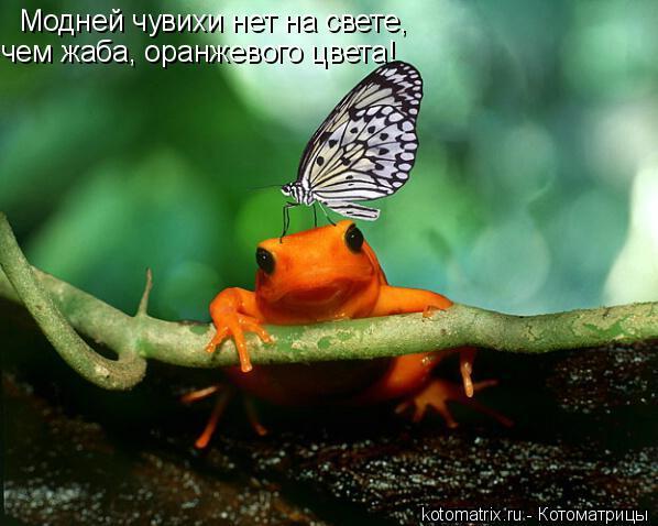 Котоматрица: Модней чувихи нет на свете, чем жаба, оранжевого цвета!