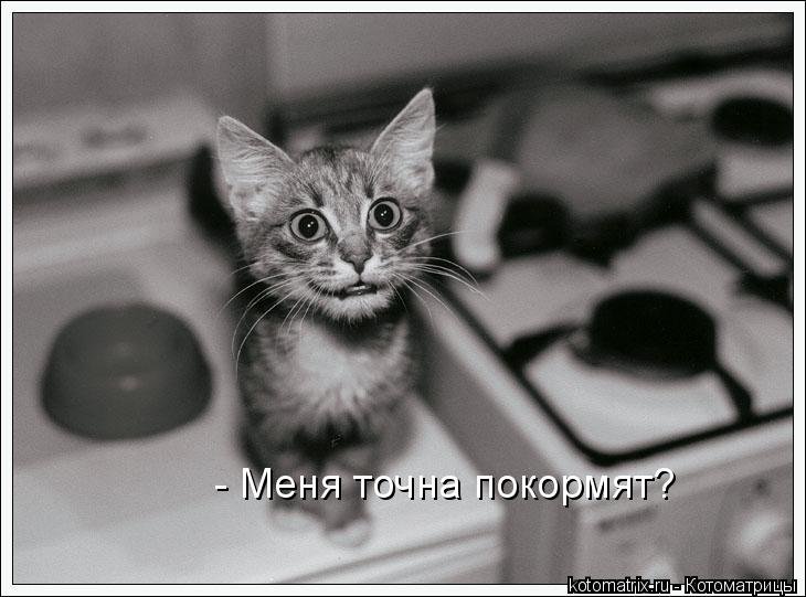 Котоматрица: - Меня точна покормят?