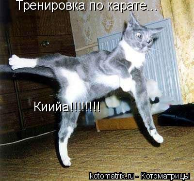 Котоматрица: Тренировка по карате... Киийа!!!!!!!!