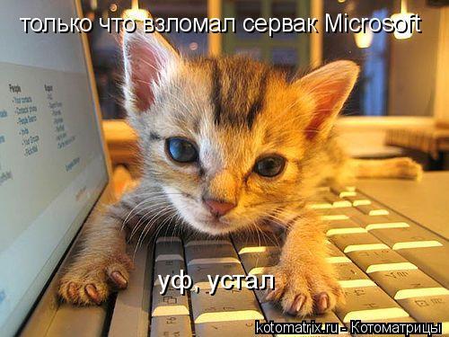 Котоматрица: только что взломал сервак Microsoft уф, устал
